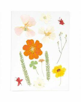 Geperste bloemen, Mix Set oranje, 13 Stk